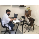 oftalmologista canina local Vila Romana